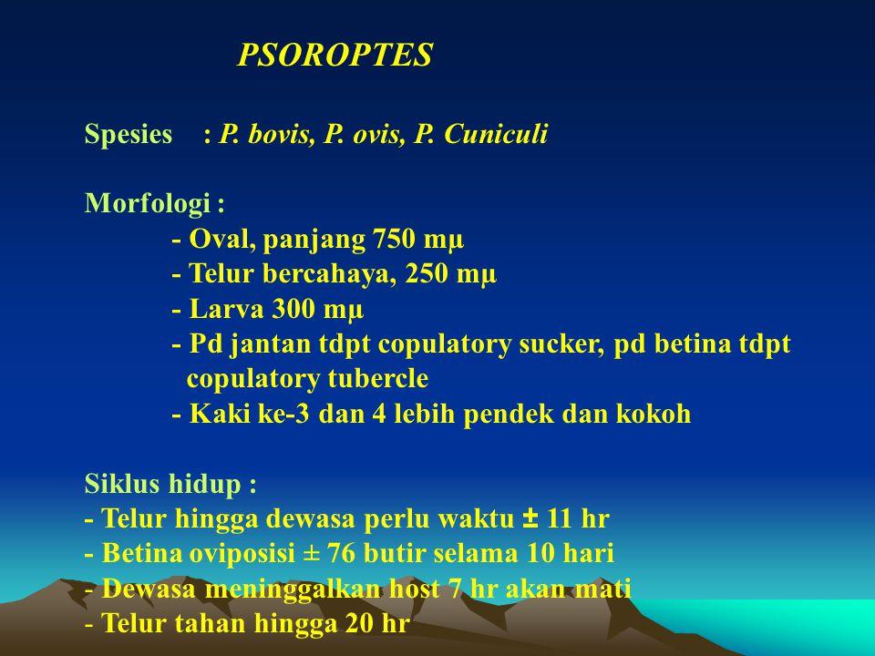 PSOROPTES Spesies : P. bovis, P. ovis, P. Cuniculi. Morfologi : - Oval, panjang 750 mµ. - Telur bercahaya, 250 mµ.