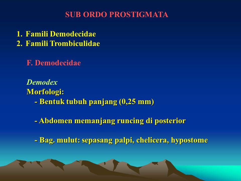 SUB ORDO PROSTIGMATA Famili Demodecidae. Famili Trombiculidae. F. Demodecidae. Demodex. Morfologi: