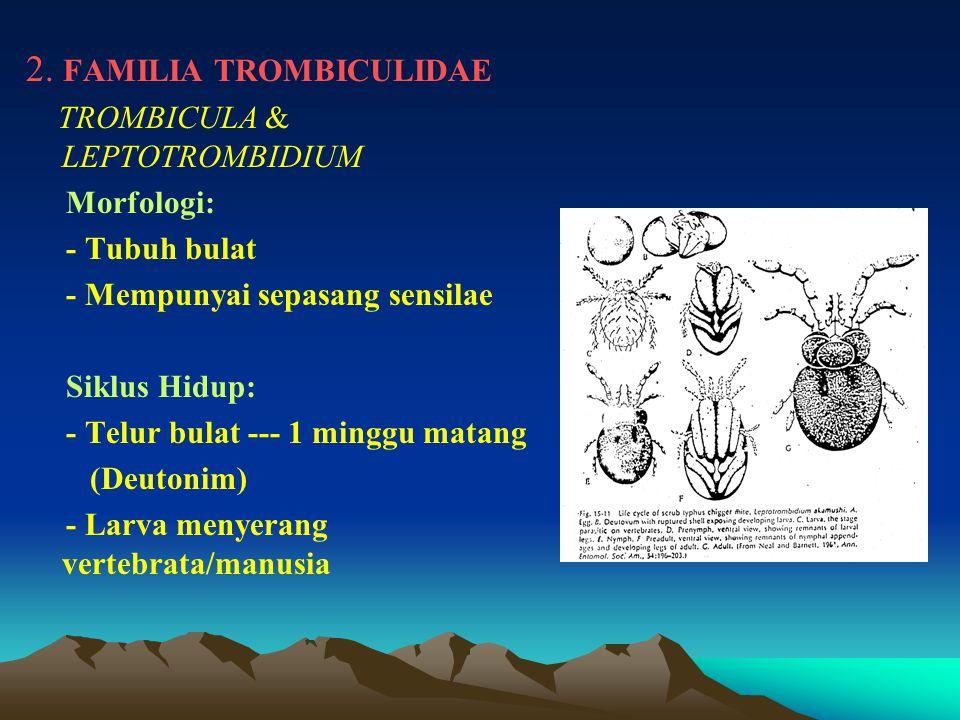 2. FAMILIA TROMBICULIDAE