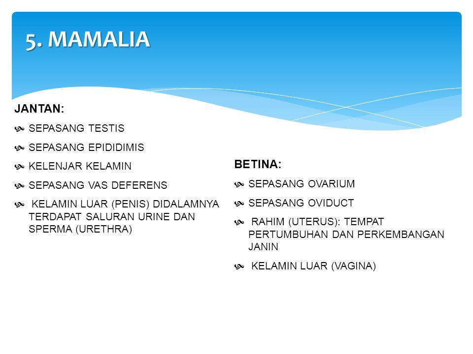 5. MAMALIA JANTAN: BETINA: SEPASANG TESTIS SEPASANG EPIDIDIMIS