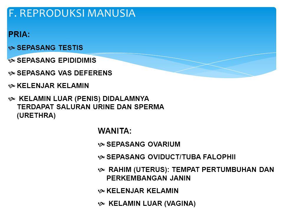 F. REPRODUKSI MANUSIA PRIA: WANITA: SEPASANG TESTIS