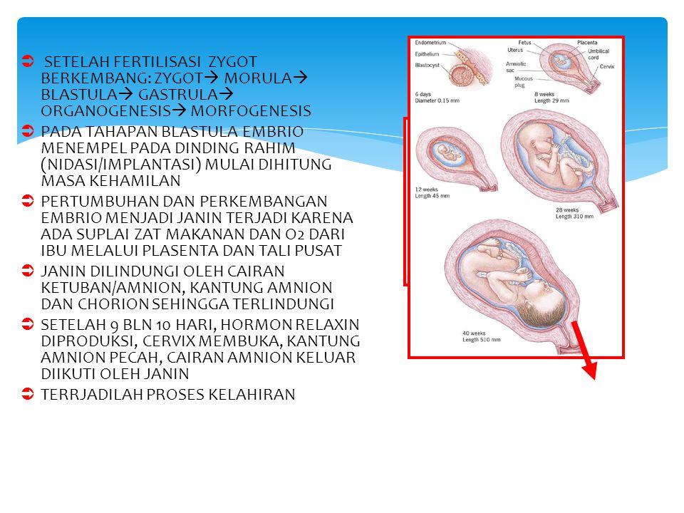 SETELAH FERTILISASI ZYGOT BERKEMBANG: ZYGOT MORULA BLASTULA GASTRULA ORGANOGENESIS MORFOGENESIS