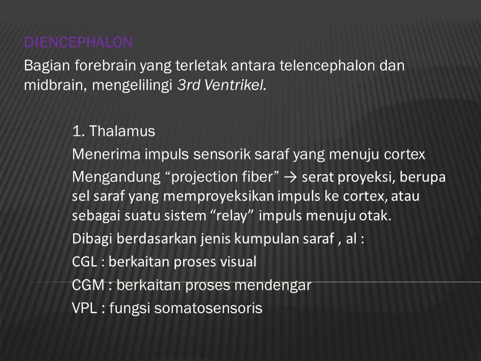 DIENCEPHALON Bagian forebrain yang terletak antara telencephalon dan midbrain, mengelilingi 3rd Ventrikel.