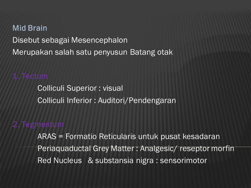 Mid Brain Disebut sebagai Mesencephalon. Merupakan salah satu penyusun Batang otak. 1. Tectum. Colliculi Superior : visual.