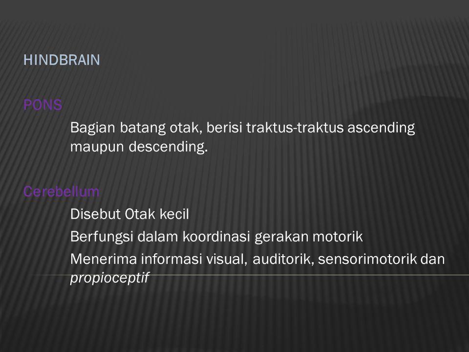 HINDBRAIN PONS. Bagian batang otak, berisi traktus-traktus ascending maupun descending. Cerebellum.