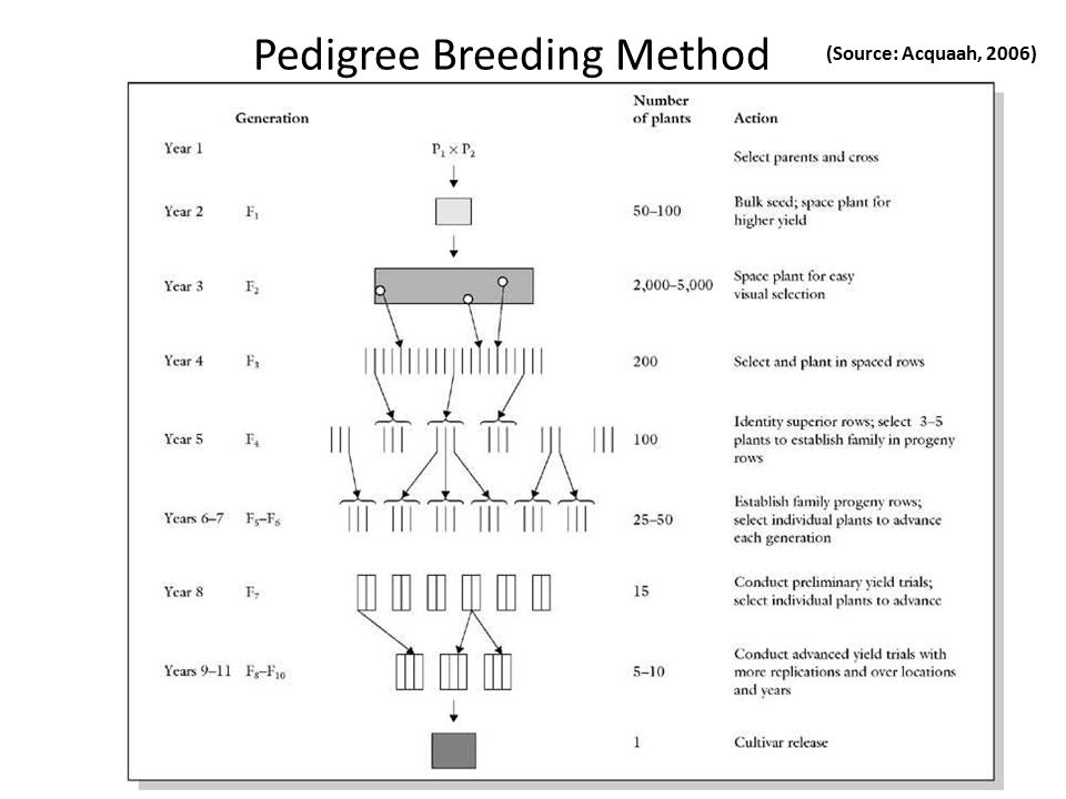Pedigree Breeding Method