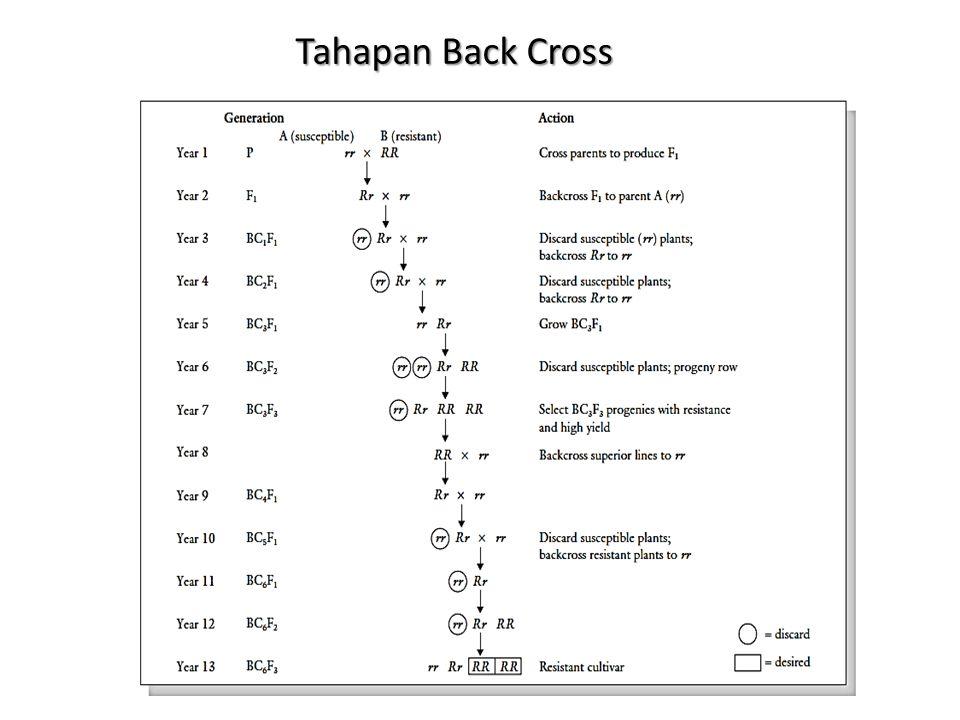 Tahapan Back Cross
