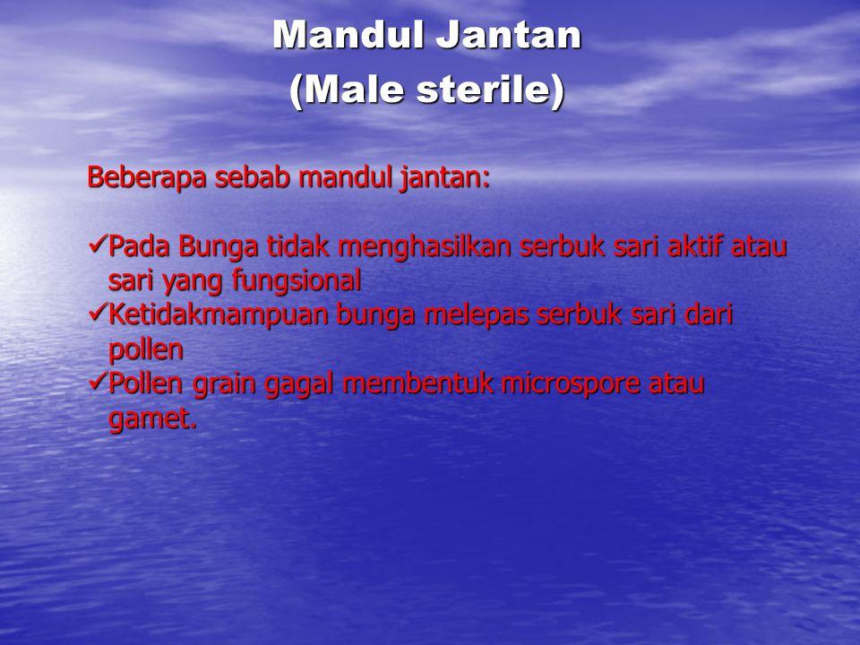 Mandul Jantan (Male sterile) Beberapa sebab mandul jantan: