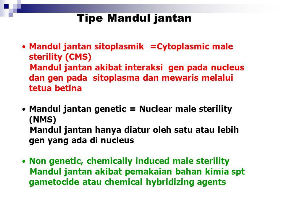 Tipe Mandul jantan Mandul jantan sitoplasmik =Cytoplasmic male sterility (CMS)