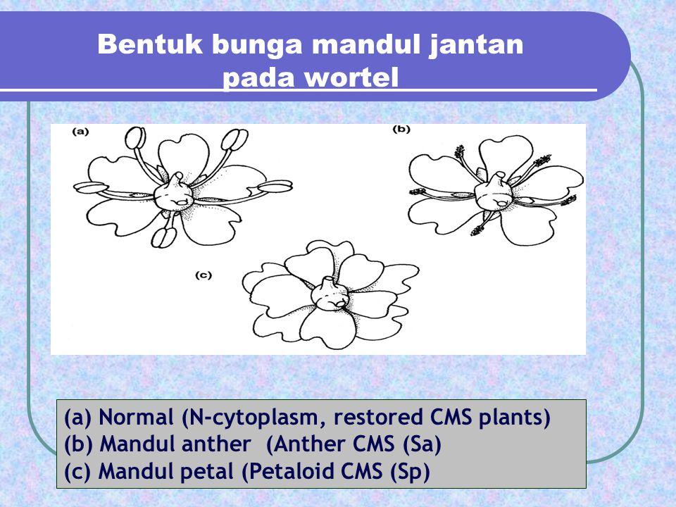 Bentuk bunga mandul jantan pada wortel