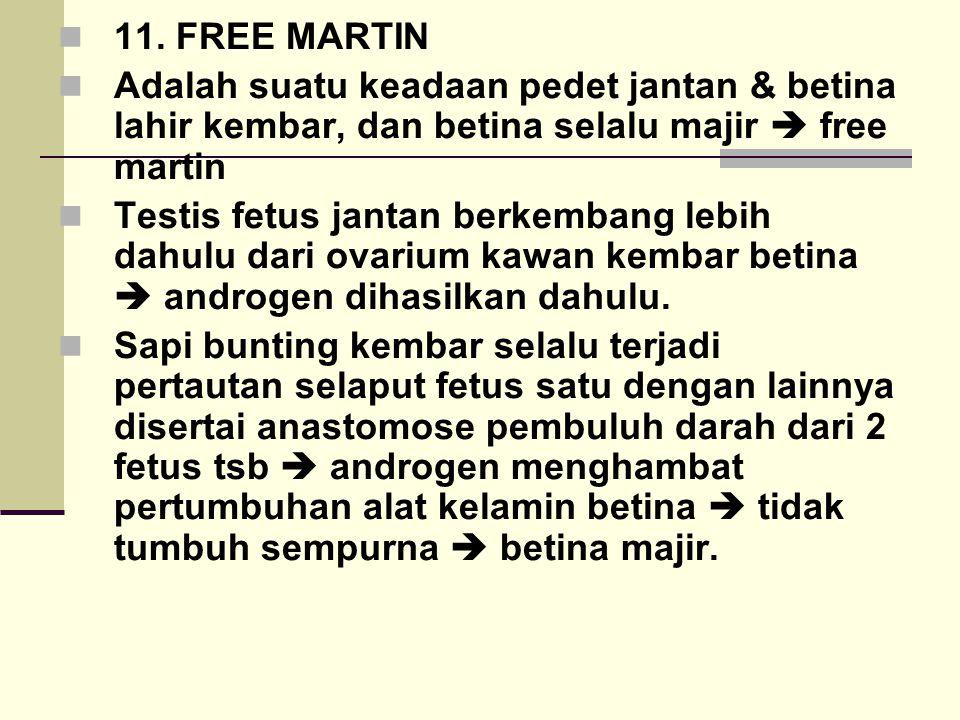 11. FREE MARTIN Adalah suatu keadaan pedet jantan & betina lahir kembar, dan betina selalu majir  free martin.