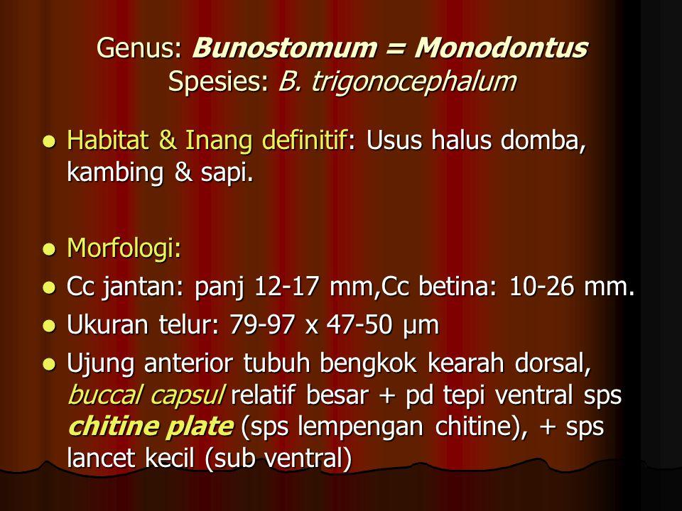 Genus: Bunostomum = Monodontus Spesies: B. trigonocephalum