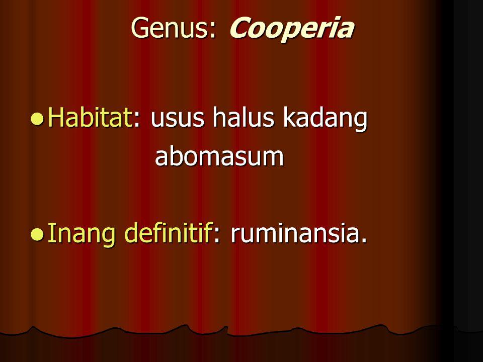 Genus: Cooperia Habitat: usus halus kadang abomasum
