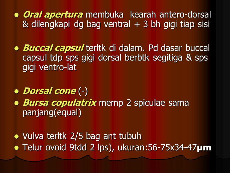 Oral apertura membuka kearah antero-dorsal & dilengkapi dg bag ventral + 3 bh gigi tiap sisi