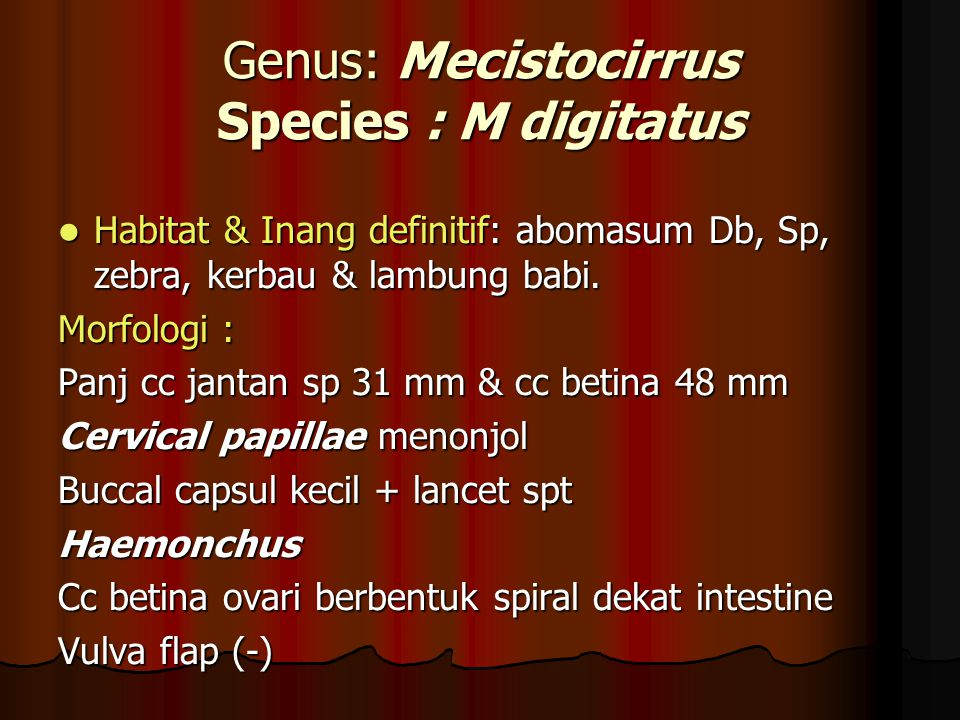 Genus: Mecistocirrus Species : M digitatus