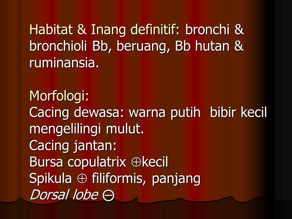 Habitat & Inang definitif: bronchi & bronchioli Bb, beruang, Bb hutan & ruminansia.
