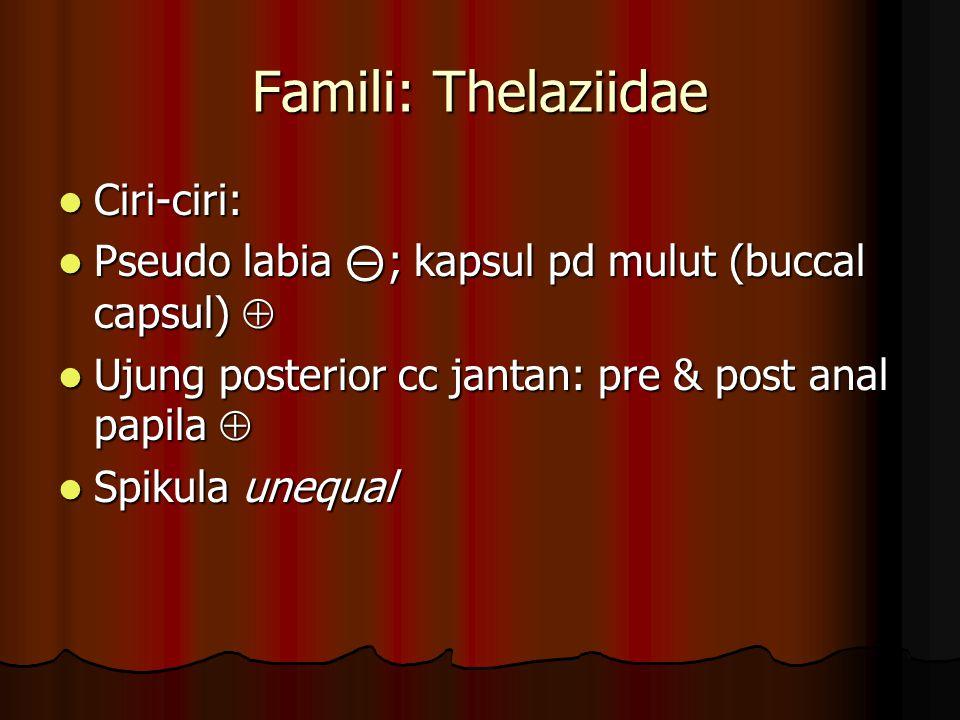 Famili: Thelaziidae Ciri-ciri: