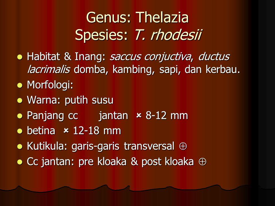 Genus: Thelazia Spesies: T. rhodesii