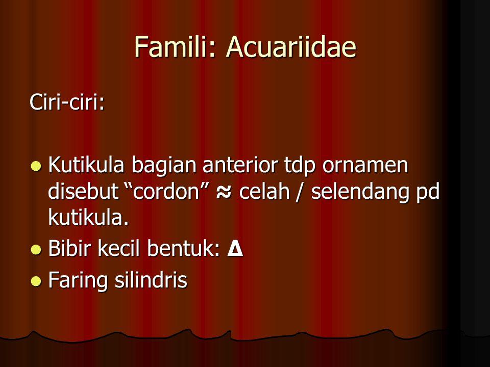 Famili: Acuariidae Ciri-ciri: