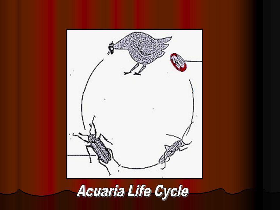 Acuaria Life Cycle