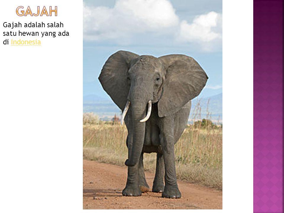gajah Gajah adalah salah satu hewan yang ada di Indonesia