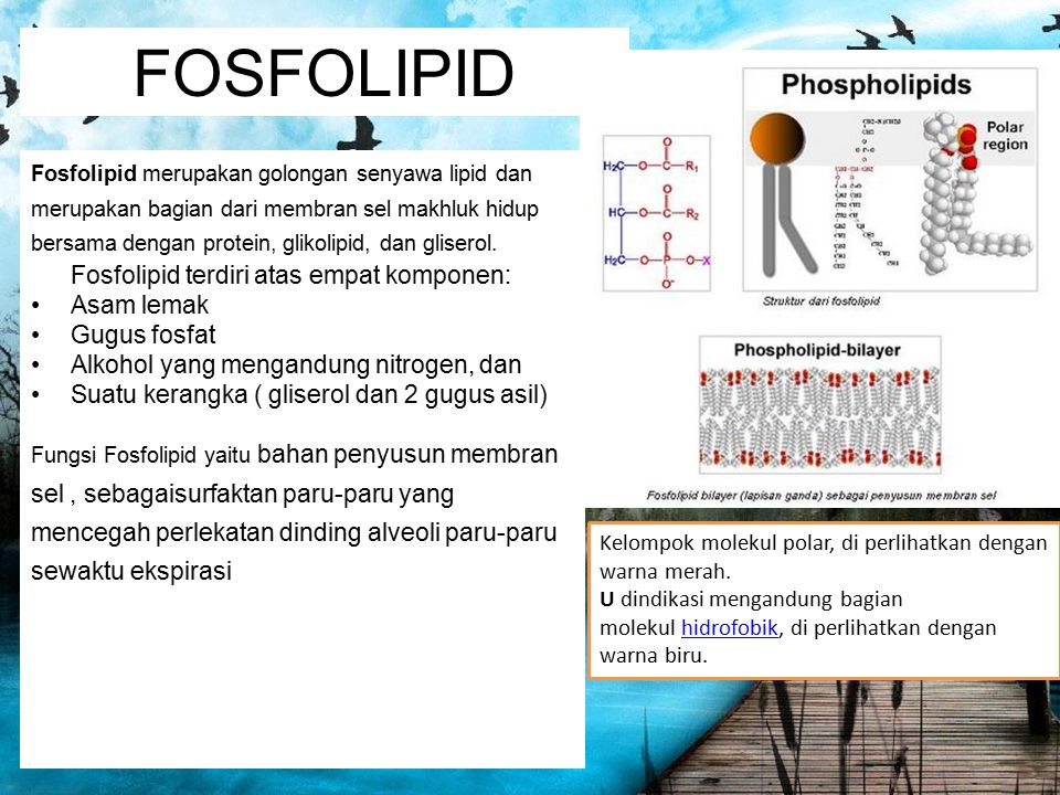 FOSFOLIPID Fosfolipid terdiri atas empat komponen: Asam lemak