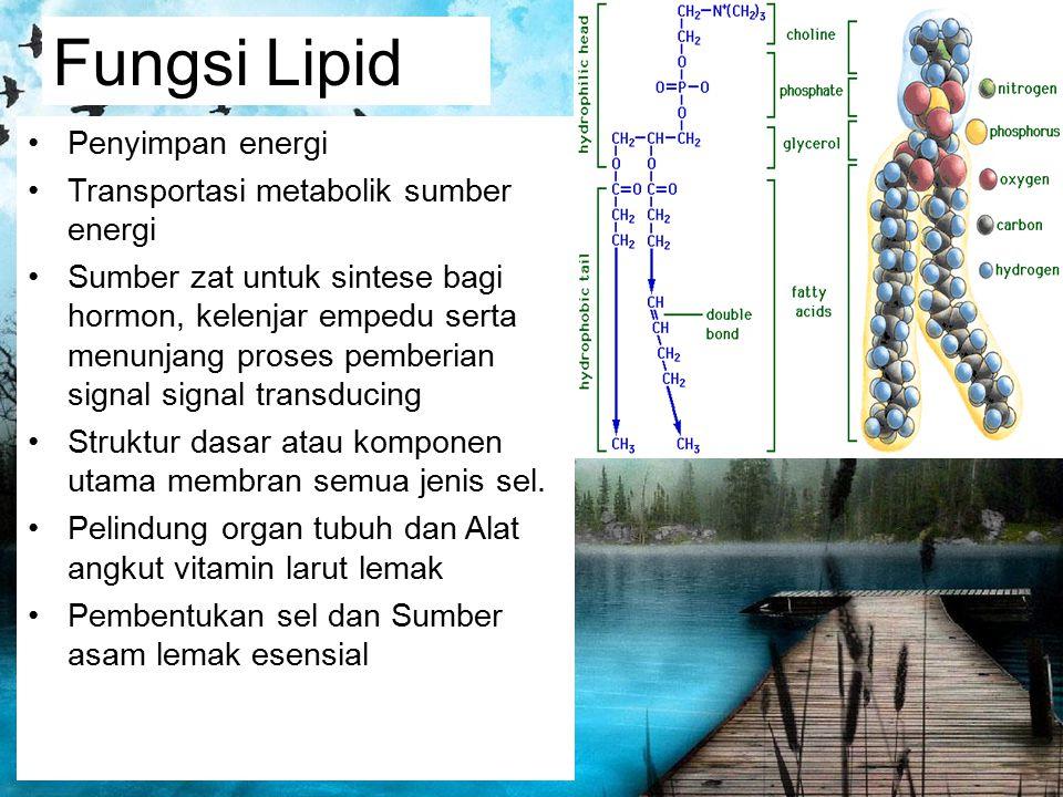 Fungsi Lipid Penyimpan energi Transportasi metabolik sumber energi