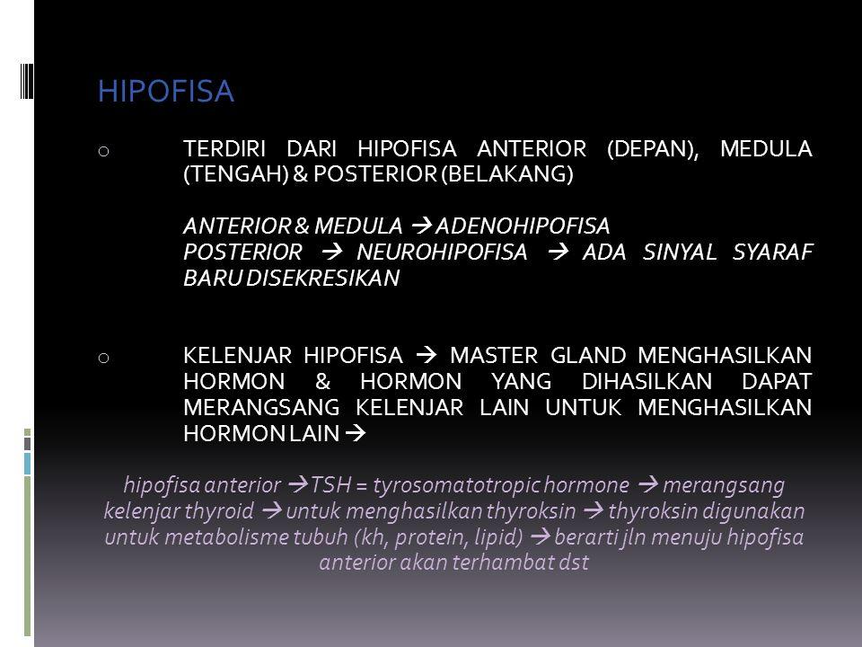 HIPOFISA TERDIRI DARI HIPOFISA ANTERIOR (DEPAN), MEDULA (TENGAH) & POSTERIOR (BELAKANG) ANTERIOR & MEDULA  ADENOHIPOFISA.