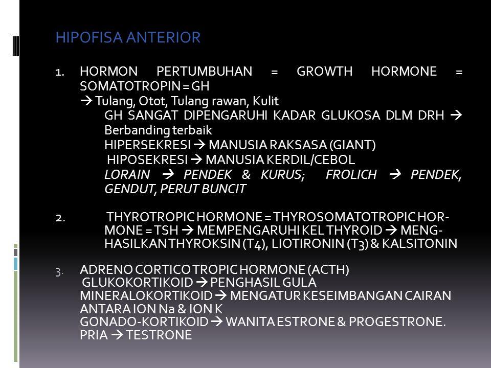 HIPOFISA ANTERIOR 1. HORMON PERTUMBUHAN = GROWTH HORMONE = SOMATOTROPIN = GH.  Tulang, Otot, Tulang rawan, Kulit.