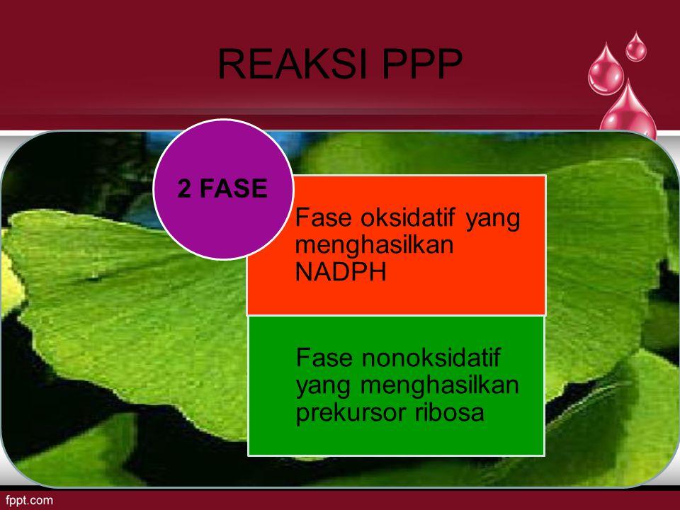 REAKSI PPP 2 FASE Fase oksidatif yang menghasilkan NADPH
