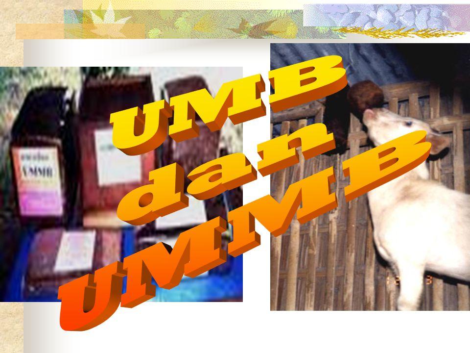 UMB dan UMMB
