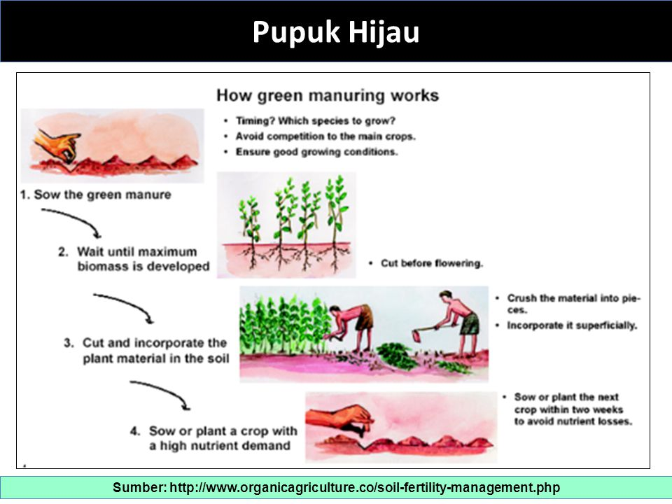 Sumber: http://www.organicagriculture.co/soil-fertility-management.php