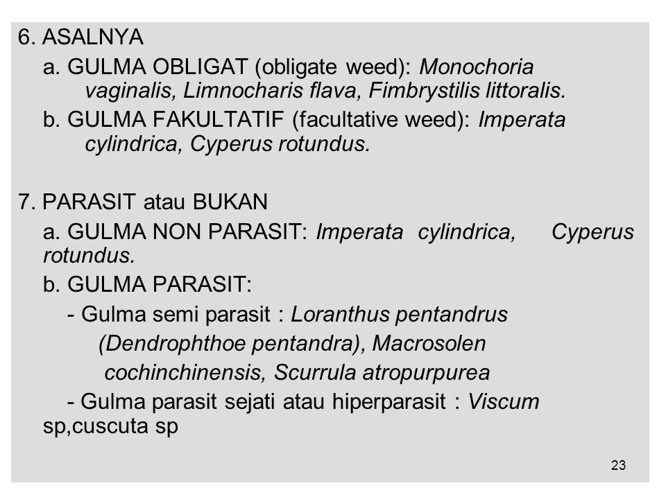 6. ASALNYA a. GULMA OBLIGAT (obligate weed): Monochoria vaginalis, Limnocharis flava, Fimbrystilis littoralis.