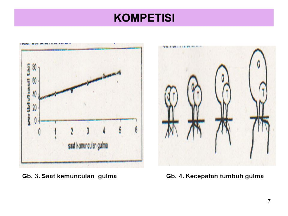 KOMPETISI Gb. 3. Saat kemunculan gulma Gb. 4. Kecepatan tumbuh gulma