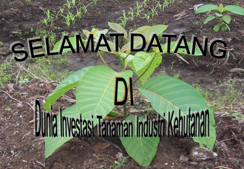 Dunia Investasi Tanaman Industri Kehutanan