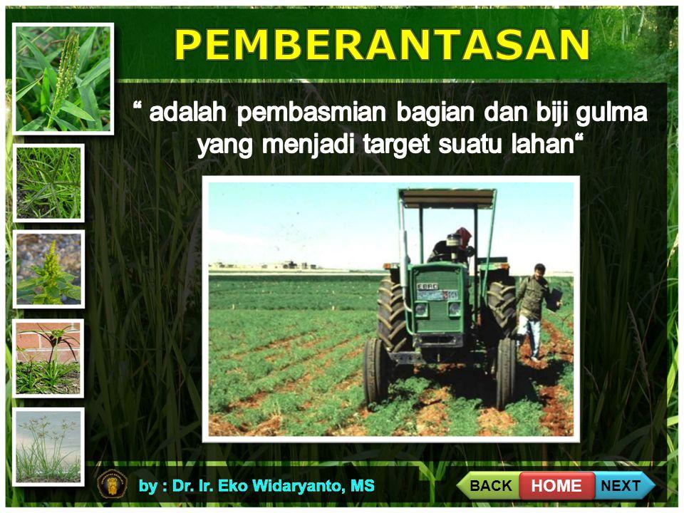 PEMBERANTASAN adalah pembasmian bagian dan biji gulma yang menjadi target suatu lahan BACK. NEXT.