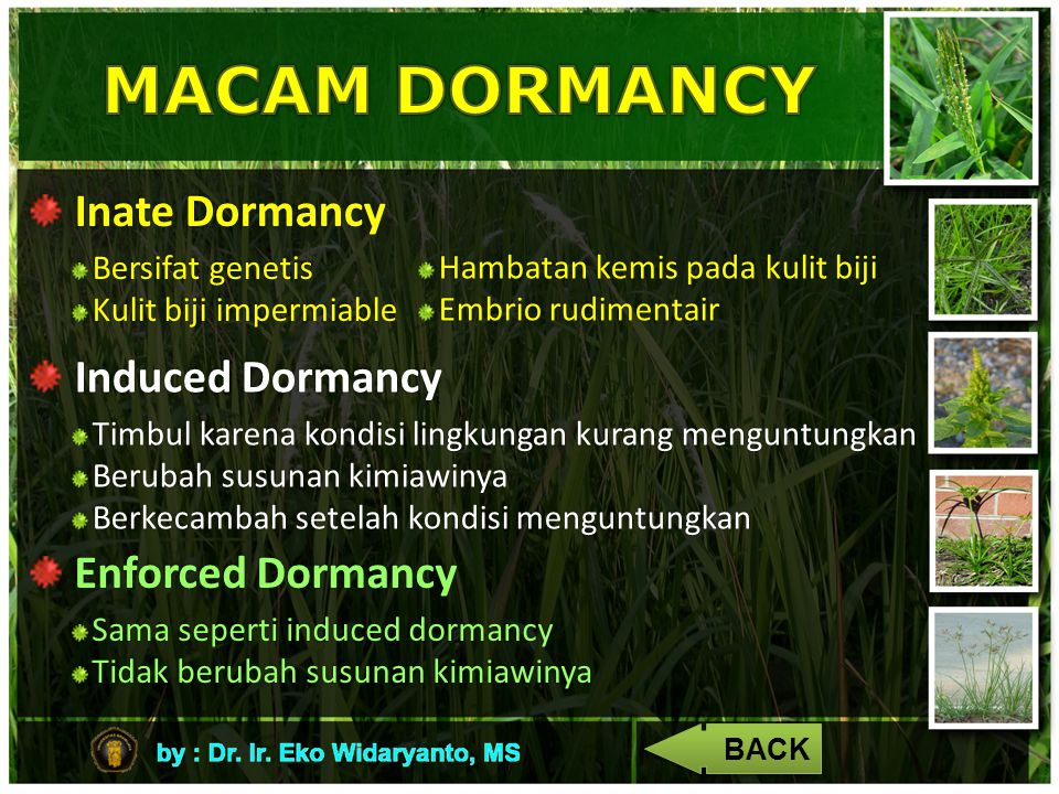 MACAM DORMANCY Inate Dormancy Induced Dormancy Enforced Dormancy
