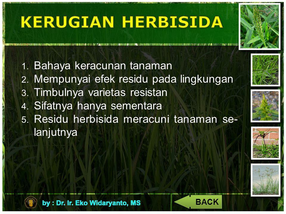 KERUGIAN HERBISIDA Bahaya keracunan tanaman