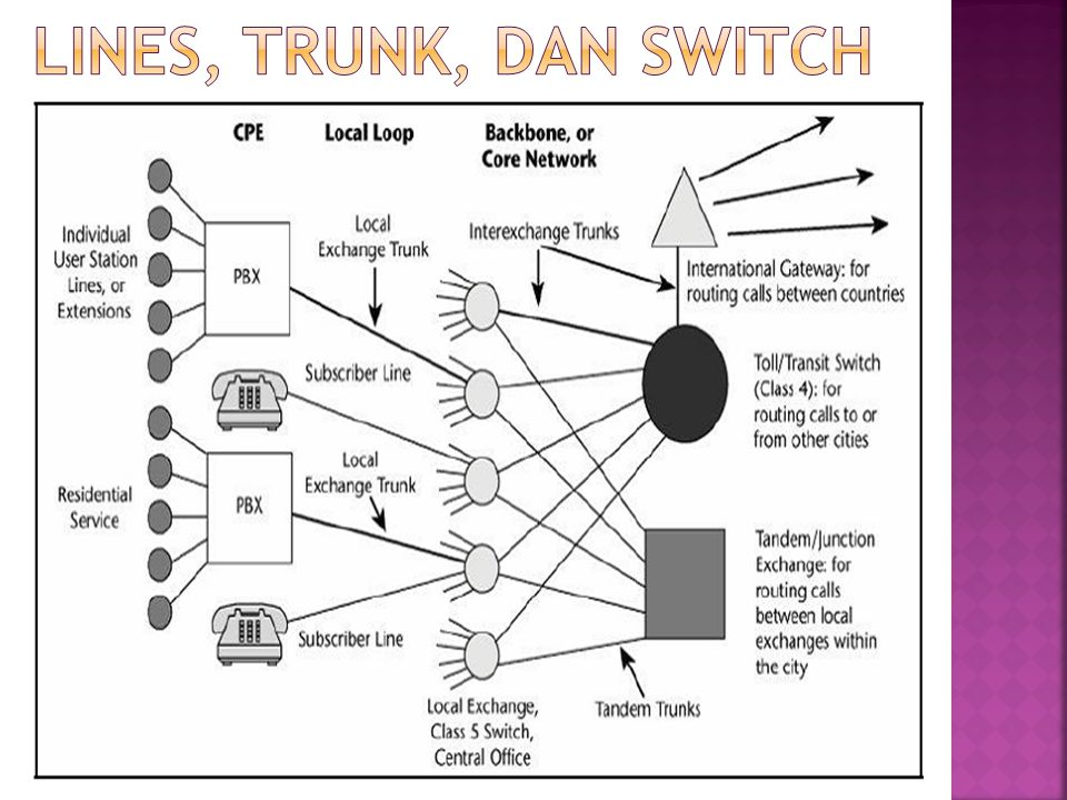 Lines, trunk, dan switch
