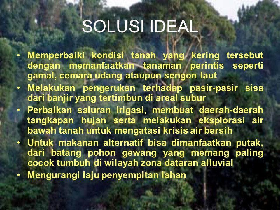 SOLUSI IDEAL Memperbaiki kondisi tanah yang kering tersebut dengan memanfaatkan tanaman perintis seperti gamal, cemara udang ataupun sengon laut.