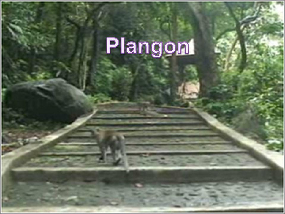 Plangon
