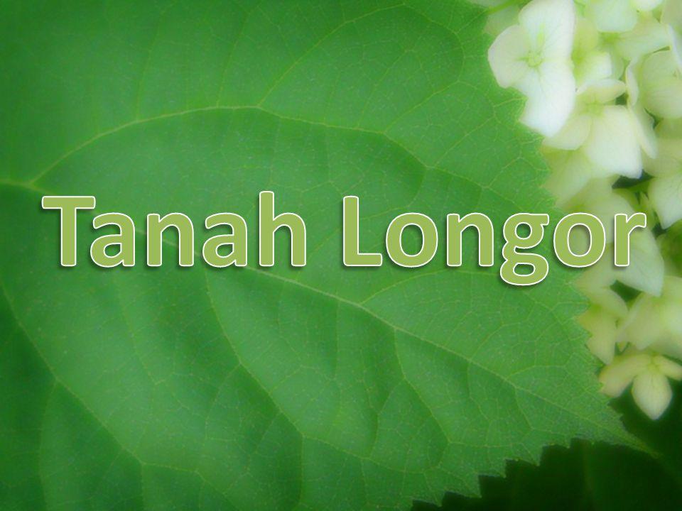 Tanah Longor