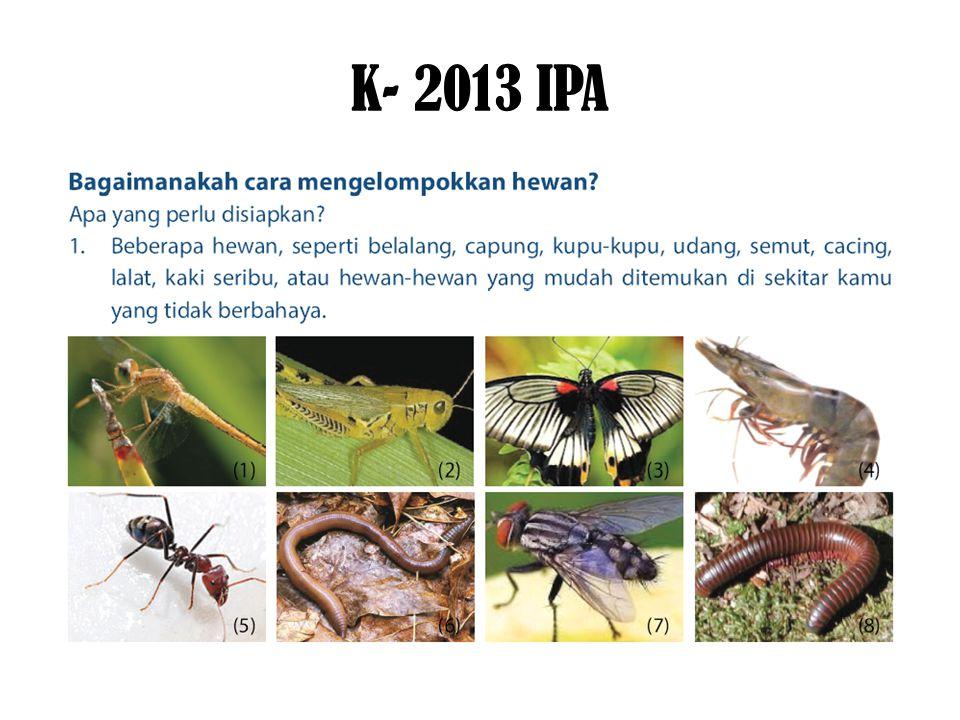 K- 2013 IPA