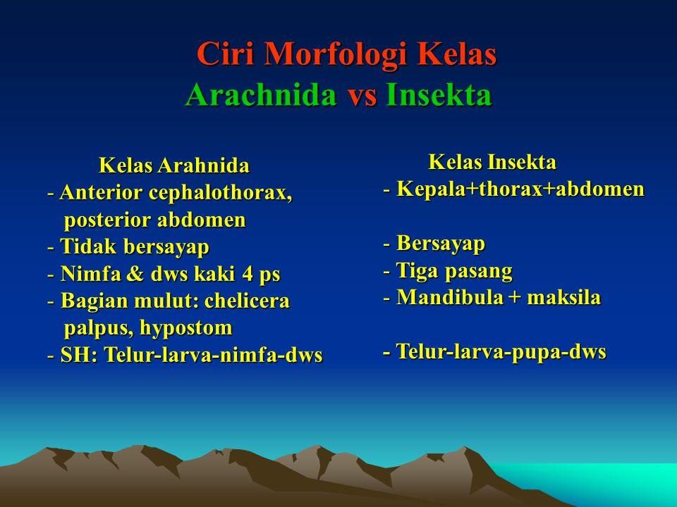 Ciri Morfologi Kelas Arachnida vs Insekta