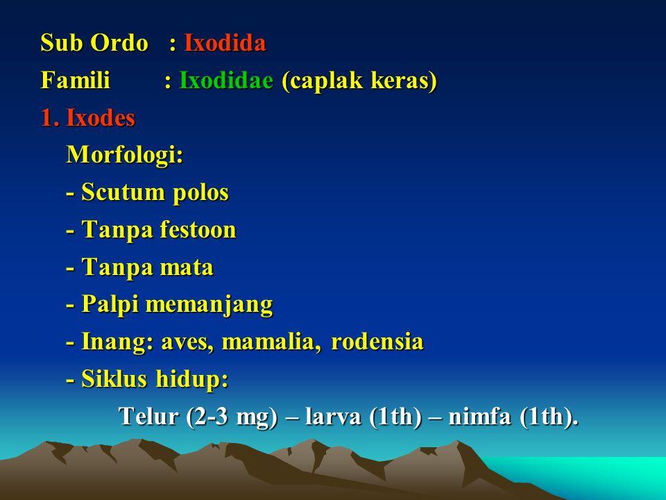 Sub Ordo : Ixodida Famili : Ixodidae (caplak keras) 1. Ixodes. Morfologi: - Scutum polos.