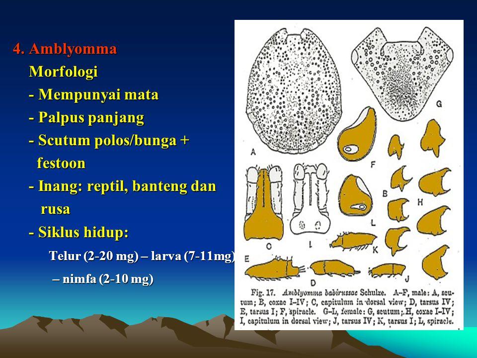 - Inang: reptil, banteng dan rusa - Siklus hidup: