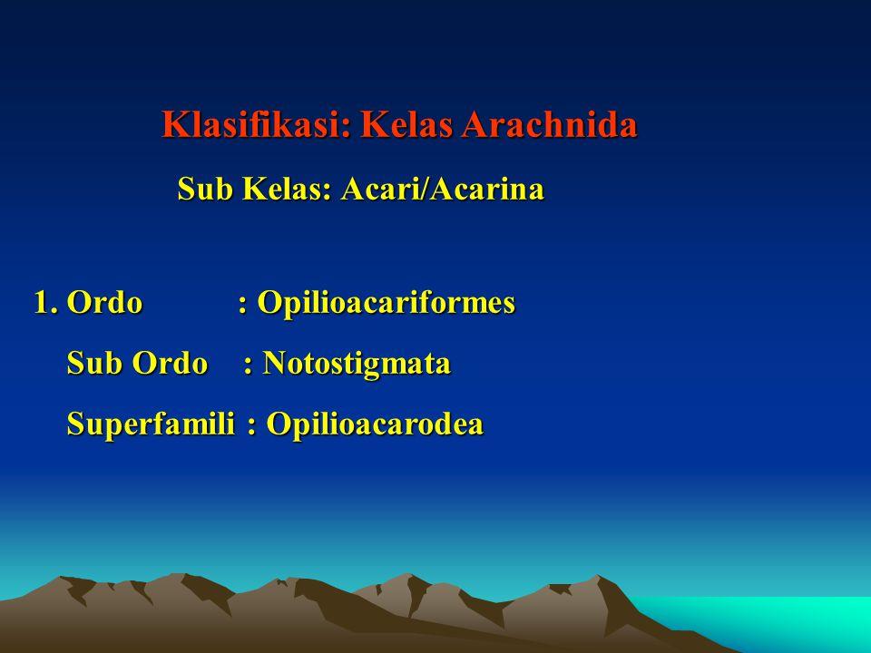 Sub Kelas: Acari/Acarina