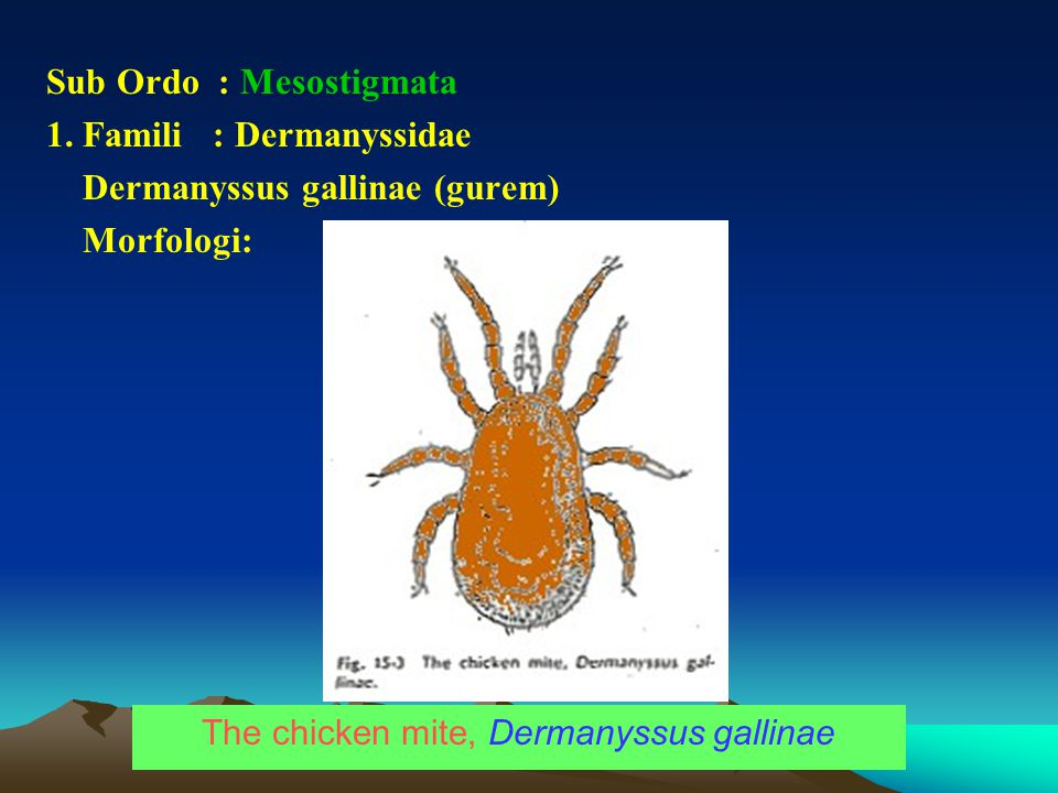 Ciri Morfologi Kelas Arachnida Vs Insekta Ppt Download