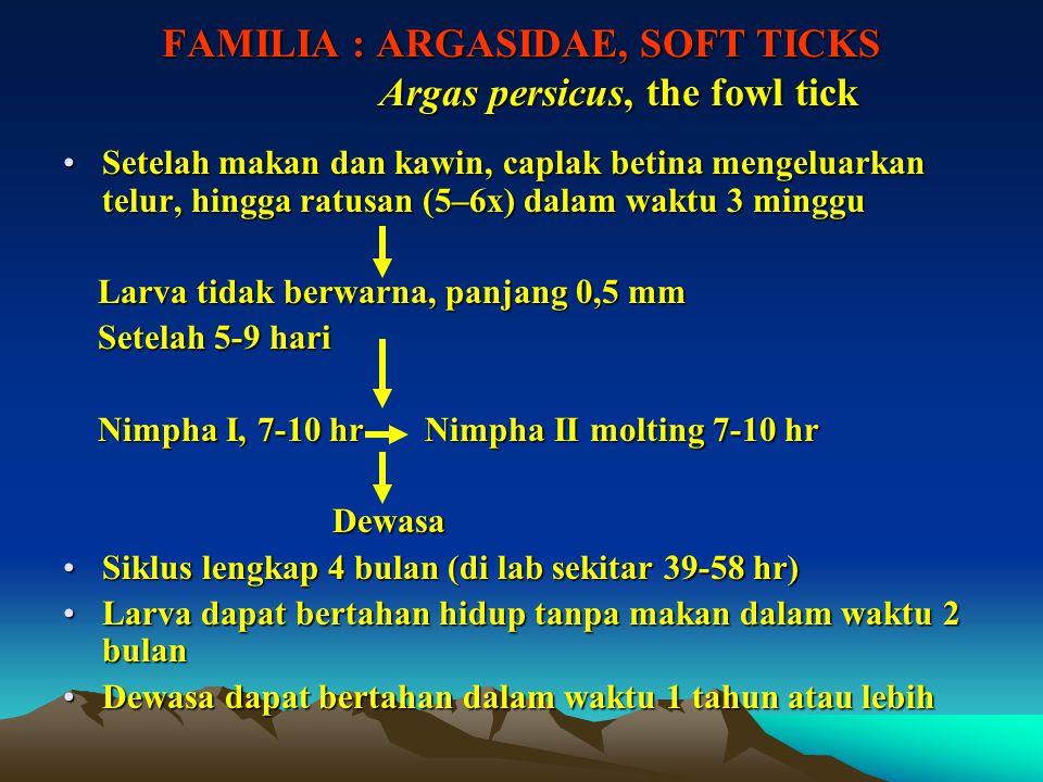 FAMILIA : ARGASIDAE, SOFT TICKS Argas persicus, the fowl tick