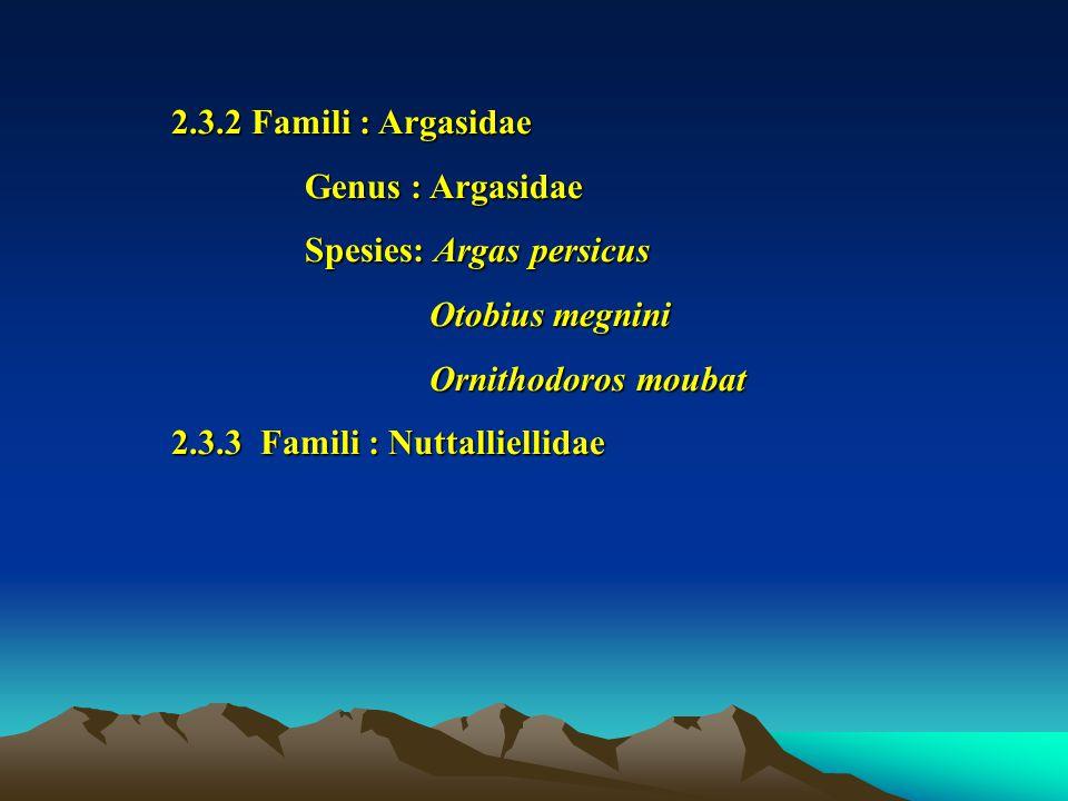 2.3.2 Famili : Argasidae Genus : Argasidae. Spesies: Argas persicus. Otobius megnini. Ornithodoros moubat.